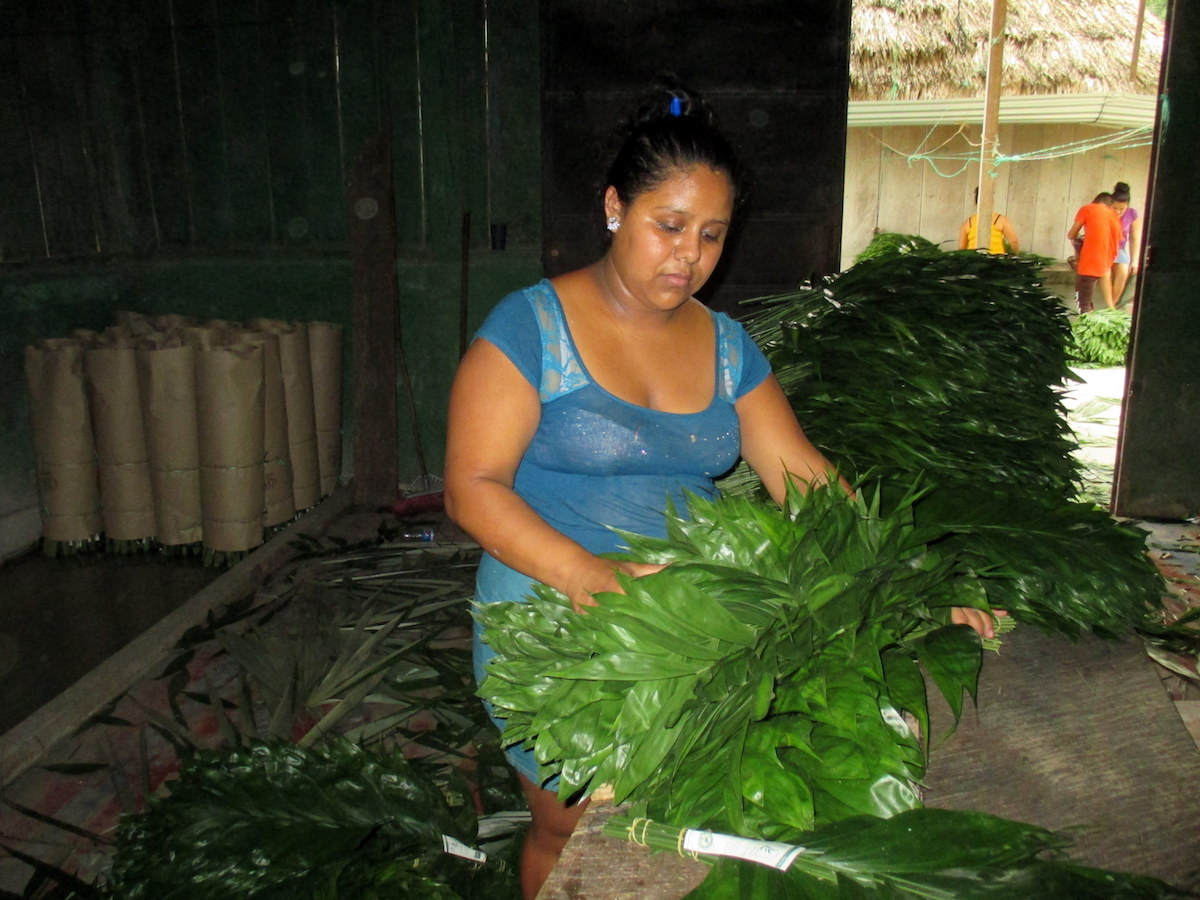 Communities lead the way in rainforest conservation in Guatemala