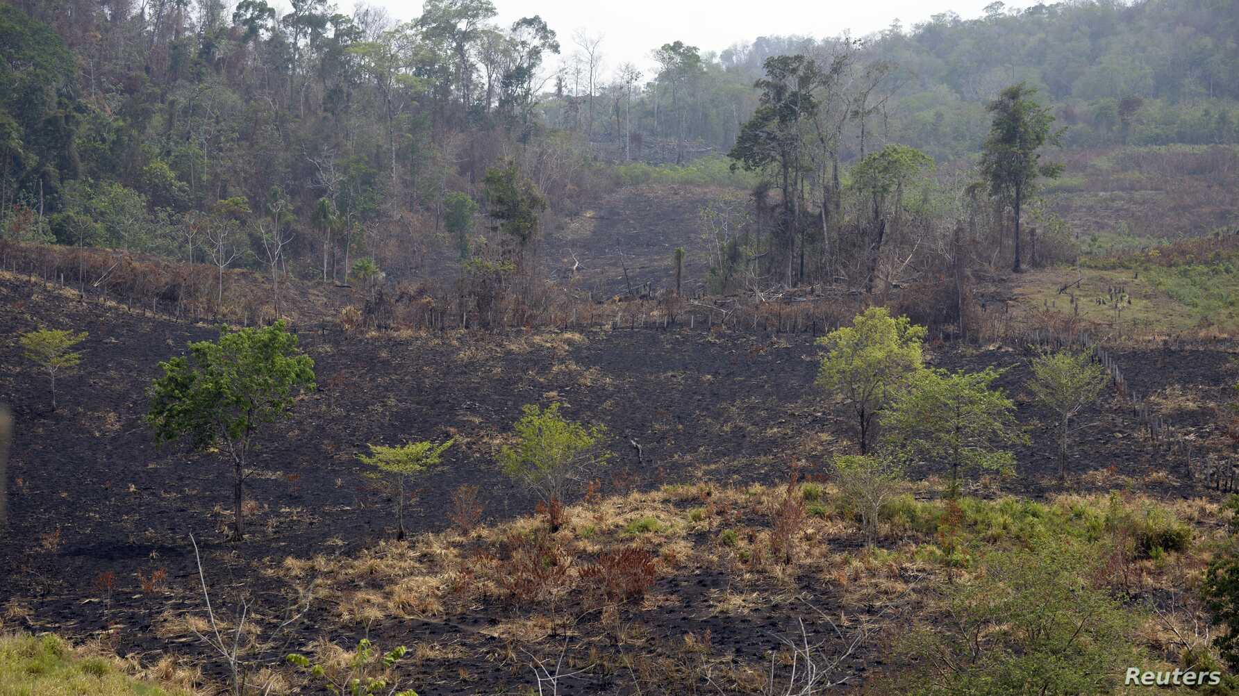 Land Rights Help Fight Fires in Guatemala Nature Reserve